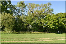 TQ6245 : Wooded pond by N Chadwick