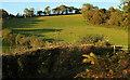 SX9269 : Pasture above Lower Gabwell by Derek Harper