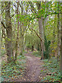 TQ5990 : Path in Warley Gap by Roger Jones