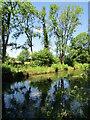 SU3227 : Mottisfont Abbey - River Test by Colin Smith