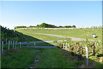 TQ6143 : Slip roads by the A21 by N Chadwick