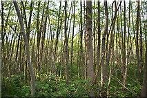 TQ6042 : Woodland near North Farm by N Chadwick