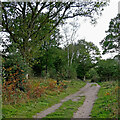 SO8175 : Footpath on the Rifle Range Nature Reserve, Worcestershire by Roger  Kidd