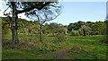 SO8175 : Rifle Range Nature Reserve near Kidderminster by Roger  Kidd