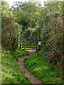 SO8175 : Track on the Rifle Range Nature Reserve in Worcestershire by Roger  Kidd