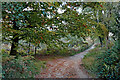 SO8074 : Bridleway in the Devil's Spittleful Nature Reserve in Worcestershire by Roger  Kidd