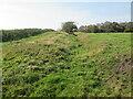 SE8492 : Cross  Dyke  in  field  on  Far  Black  Rigg by Martin Dawes
