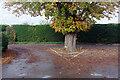 SP8242 : Horse chestnut at Haversham by Stephen McKay