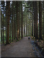 J3432 : Path, Tollymore by Rossographer