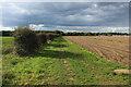TM1230 : Essex Way heading West towards Furze Hill by Chris Heaton