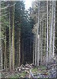 NJ4650 : Logs by Anne Burgess