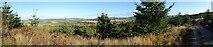 NJ4750 : Balloch Wood by Anne Burgess