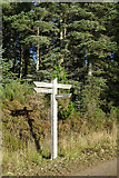 NJ4747 : Forest Waymarker by Anne Burgess