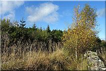 NJ5146 : Beside Brownhill Wood by Anne Burgess
