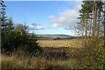 NJ5044 : Loch of Mortlach by Anne Burgess