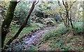 NZ1048 : Woodland stream by Robert Graham
