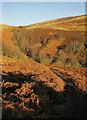 NT9516 : Approaching Linhope Spout by Derek Harper