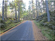 NH9817 : Road junction in Abernethy Forest by Peter Wood