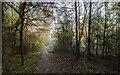TF0820 : Sunlight and trees by Bob Harvey