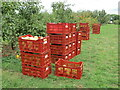 TQ0657 : Wisley - Fruit Harvest by Colin Smith