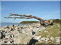 ST3870 : Drifted onto Gullhouse Point by Neil Owen