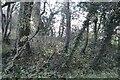 TF0516 : Field edge by Bob Harvey
