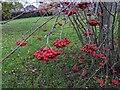 TF0820 : Berries by Bob Harvey