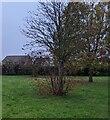 TF0820 : Some sort of Sorbus by Bob Harvey