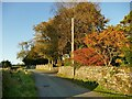 SD3081 : Autumn colours at Gawith Field by Stephen Craven