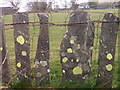 SH6369 : Slate fence with patches of lichen, Llanllechid by Meirion