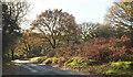 SX7072 : Autumn near Poundsgate by Derek Harper