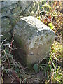 NZ0726 : Old Boundary Marker in Woodland by Mike Rayner