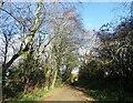 NZ1053 : Autumn trees along the Derwent Walk by Robert Graham