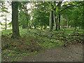 SE2337 : Fallen branch, Horsforth Hall Park by Stephen Craven