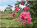 TQ1352 : Polesden Lacey - Rose Garden by Colin Smith