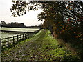 TG3129 : Path beside Hedge by David Pashley