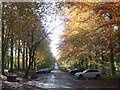 ST5573 : The old carriage drive in Autumn by Neil Owen