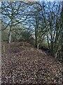 TF0821 : The wood's edge by Bob Harvey