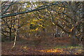 TM4560 : Woodland on Aldringham Common by Christopher Hilton