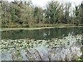 SK3623 : Eastern shore, Dick's Pit, Ticknall limeyards by Christine Johnstone