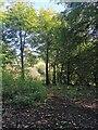 TQ5500 : Friston Forest by PAUL FARMER