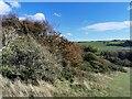 TQ5501 : Friston Forest by PAUL FARMER