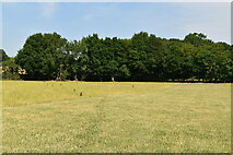 TQ4048 : Little Earls Wood by N Chadwick