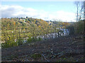 ST5574 : The Avon gorge from Leigh Woods by Neil Owen