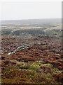 NZ6603 : Bield and bomb crater by Mick Garratt