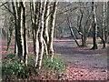 SU8935 : Gibbet Hill - Birch Woodland by Colin Smith