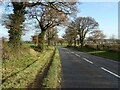 SO7729 : Autumn oak trees on the A417 by Philip Halling