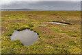 NU0942 : Saltmarsh by Ian Capper