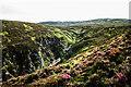 NN8489 : Allt Lorgaidh flowing in Slochd Beag by Trevor Littlewood