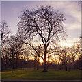 TQ2680 : Trees near sundown, Kensington Gardens by Roger Jones